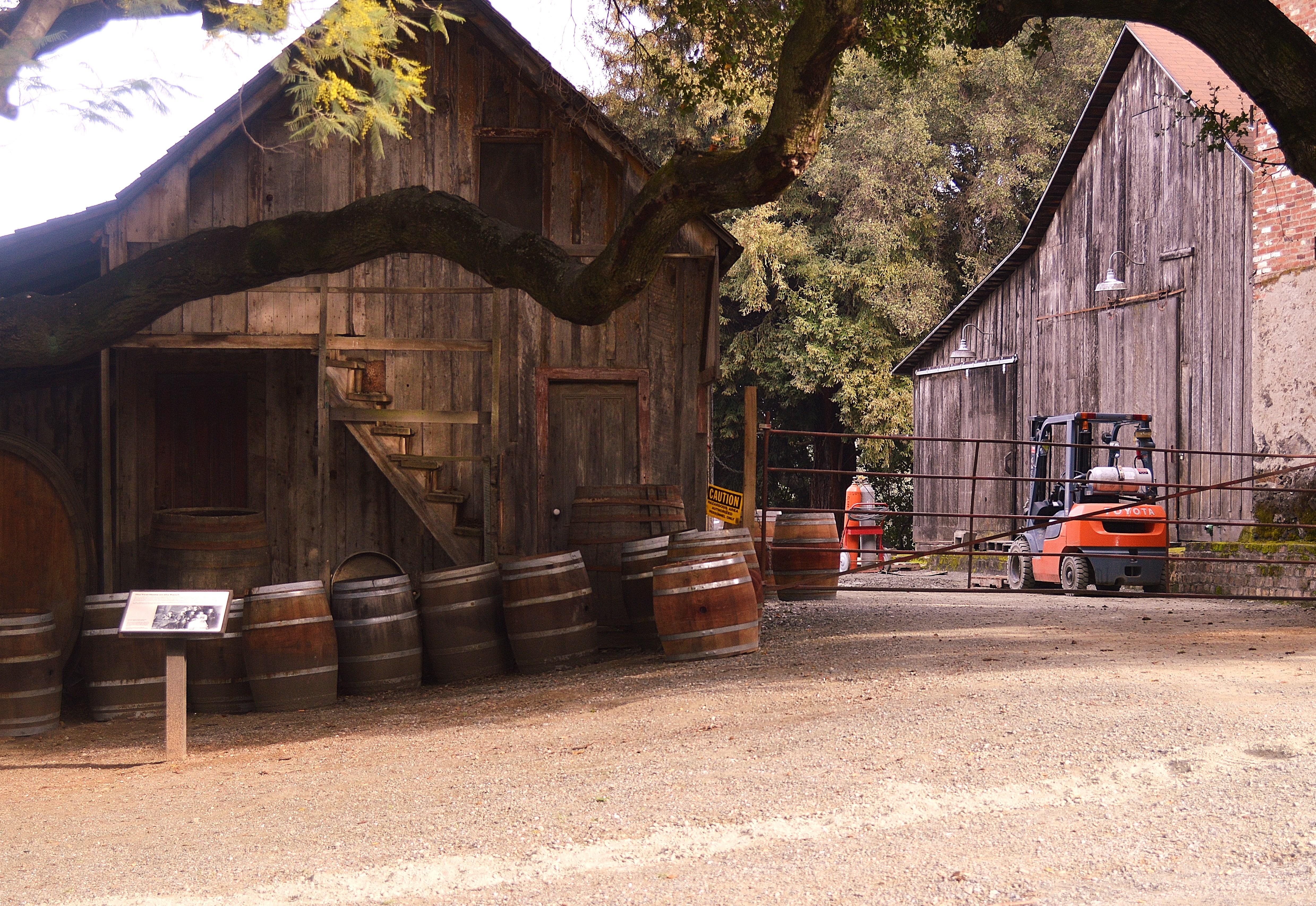Old Picchetti Winery in Cupertino off Montebello Rd.